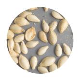 pumpkin seeds rain form protein ingredients
