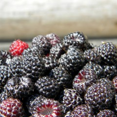 Why Should I Eat Black Raspberries?